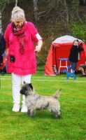 Rich CAC Bjuv terrier specialty